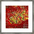 Crimson Window Framed Print