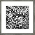 European Wall Lizard In Desenzano. Lago Di Garda Framed Print