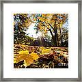 Fall Autumn Park. Falling Leaves Framed Print