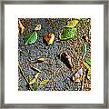 Fallen Leaves Framed Print