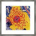 False-colour Tem Of A Human Mast Cell Framed Print