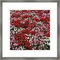 Flower Bed Framed Print