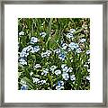 Flowers In Switzerland Framed Print