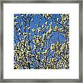 Fluffy Catkins At At Tree Against Blue Sky Framed Print
