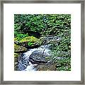 Forest Creek Framed Print