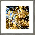 Forest Tale - Featured 3 Framed Print