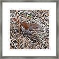 Fox Sparrow 2 Framed Print