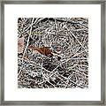 Fox Sparrow Framed Print