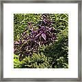 Garden Color At Woodward Park 8f Framed Print