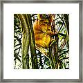 Gold Mane Framed Print