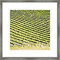 Grape Vines Framed Print