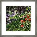 High Country Wildflowers 2 Framed Print