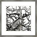 Ice On Branches Framed Print
