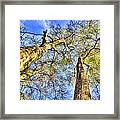 Into The Sky Framed Print