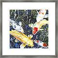 Koi Deep Blue Framed Print