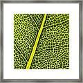 Leafy Details Framed Print