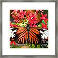 Madeira Butterfly Framed Print