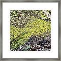 Marshy Framed Print