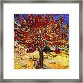 Mulberry Tree Framed Print