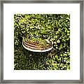 Mushroom Plate Framed Print
