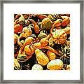 Out Of My Gourd Framed Print