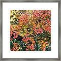 Pallette Of Fall Colors Framed Print