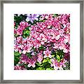 Pink And Blue Rhododendron Framed Print
