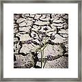 Plant Growing Through Dirt Crack During Drought   Framed Print