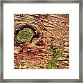 Roots Of A Money Tree Framed Print