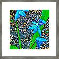 Scilla In New Maiden Cemetery In Moscow-russia  Framed Print