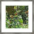 Sunflower Garden Framed Print by Annette Allman