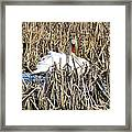 Swanly Framed Print