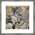 Symbiosys Framed Print