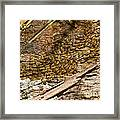 Termites On Log Framed Print by William H. Mullins