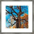 Texture Of The Bark. Old Oak Tree Framed Print