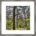 The Forest Path Framed Print by David Pyatt