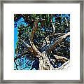Tree Climbing Paradise Framed Print