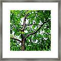 Trees In A Park, Adams Park, Wheaton Framed Print