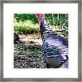 Turkey Lurkey Framed Print