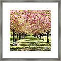 Under The Cherry Blossom Trees Framed Print