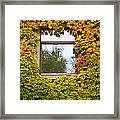 Wall Overgrown With Fall Colored Vine And Ivy Framed Print