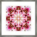 Lily Mandala Framed Print