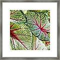 White And Pink Framed Print