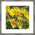 Wild Okanagan Sunflowers Framed Print