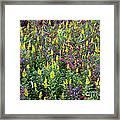 Wildflower Meadow Framed Print