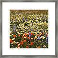 Wildflower Wonderland 9 Framed Print