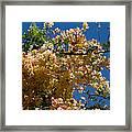 Wilhelmina Tenney Rainbow Shower Tree Framed Print