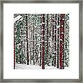 Winters Forest Framed Print