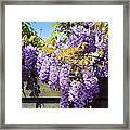Wisteria Garden 8 Framed Print