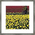 Worker Carrying Tulips Framed Print